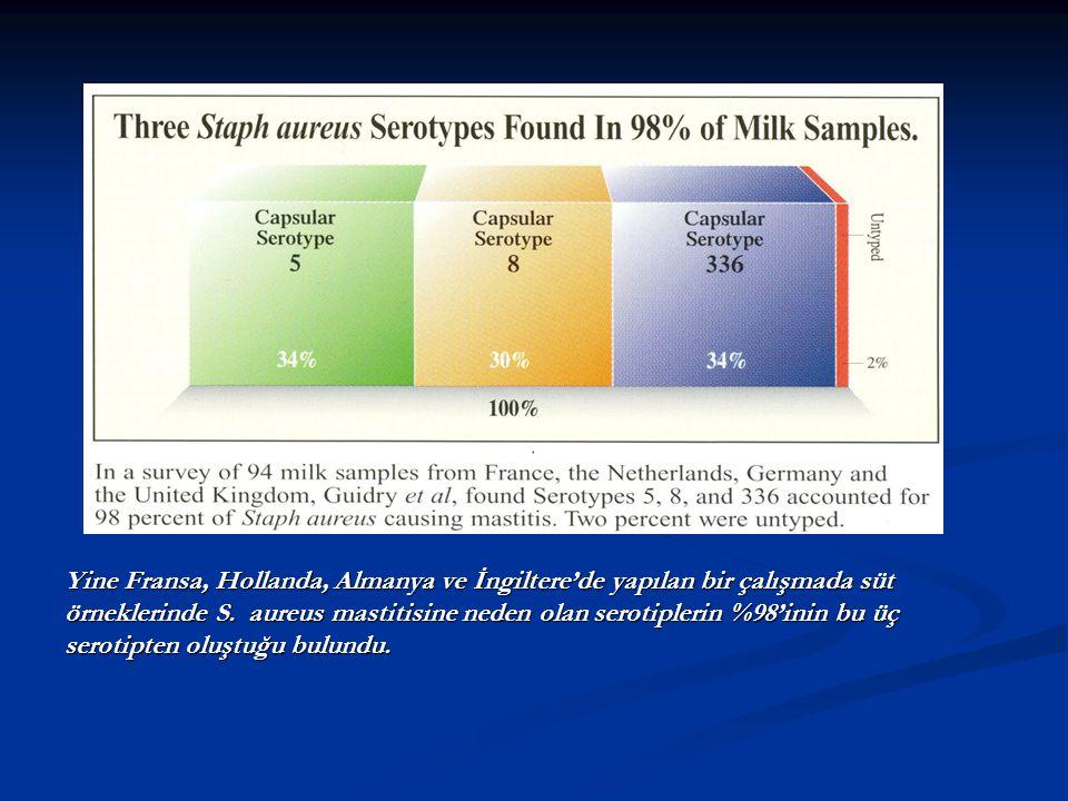 Yine Fransa, Hollanda, Almanya ve İngiltere'de yapılan bir çalışmada süt örneklerinde S. aureus mastitisine neden olan serotiplerin %98'inin bu üç ser