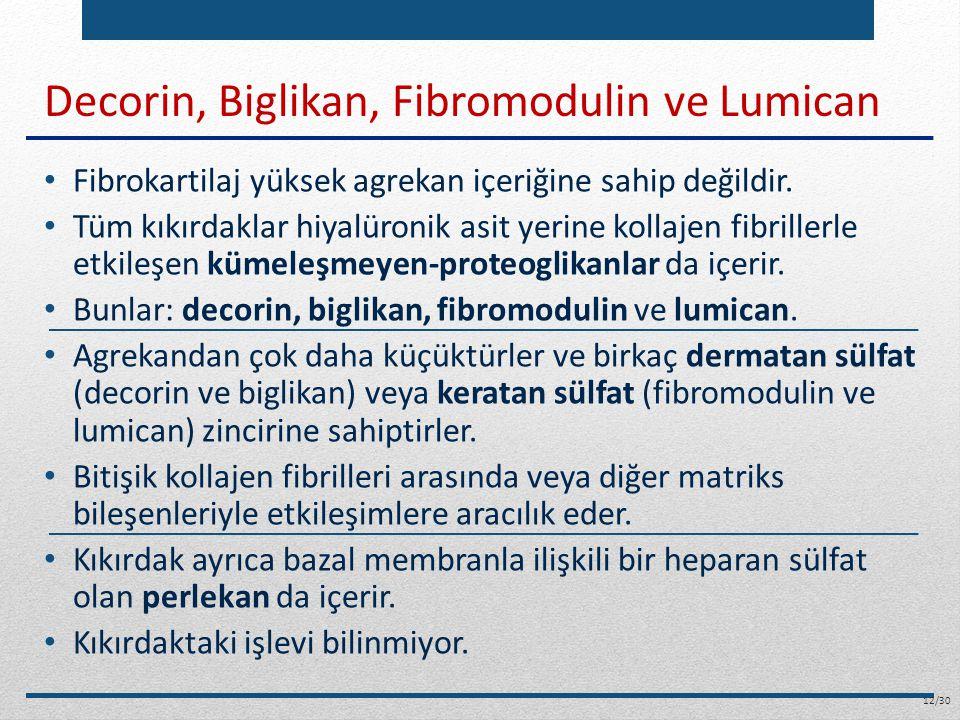 Decorin, Biglikan, Fibromodulin ve Lumican Fibrokartilaj yüksek agrekan içeriğine sahip değildir. Tüm kıkırdaklar hiyalüronik asit yerine kollajen fib