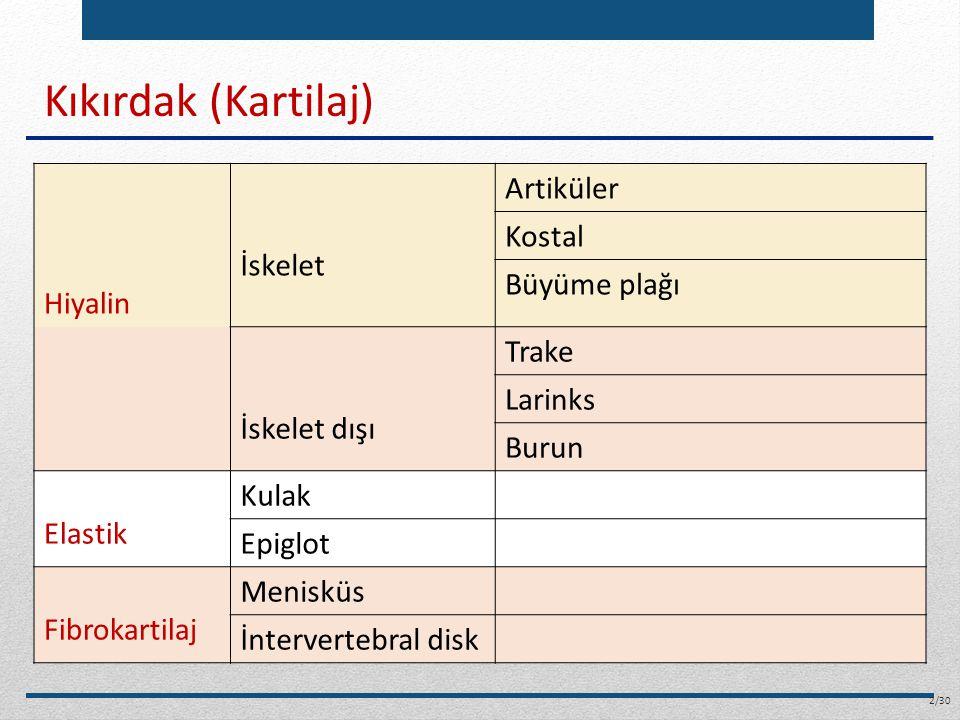 Osteoblast Kökeni 23/30