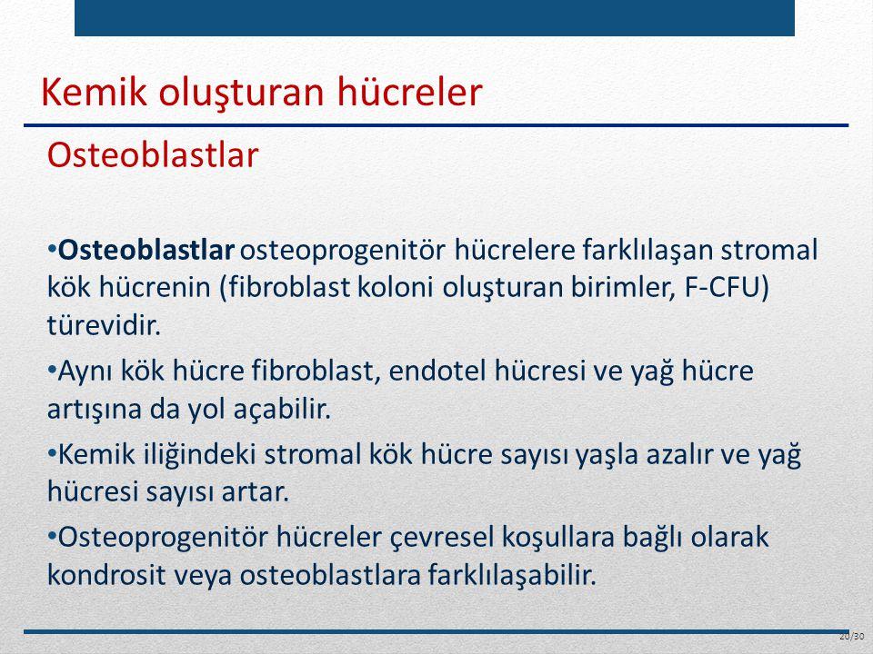 Kemik oluşturan hücreler Osteoblastlar Osteoblastlar osteoprogenitör hücrelere farklılaşan stromal kök hücrenin (fibroblast koloni oluşturan birimler,