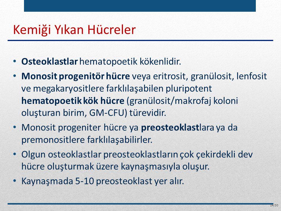Kemiği Yıkan Hücreler Osteoklastlar hematopoetik kökenlidir. Monosit progenitör hücre veya eritrosit, granülosit, lenfosit ve megakaryositlere farklıl