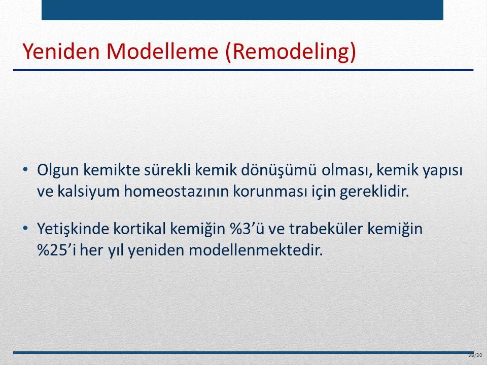 Yeniden Modelleme (Remodeling) Olgun kemikte sürekli kemik dönüşümü olması, kemik yapısı ve kalsiyum homeostazının korunması için gereklidir. Yetişkin