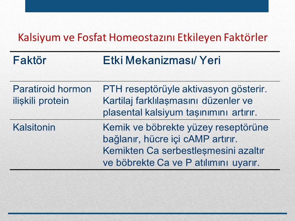 Kalsiyum ve Fosfat Homeostazını Etkileyen Faktörler FaktörEtki Mekanizması/ Yeri Paratiroid hormon ilişkili protein PTH reseptörüyle aktivasyon göster