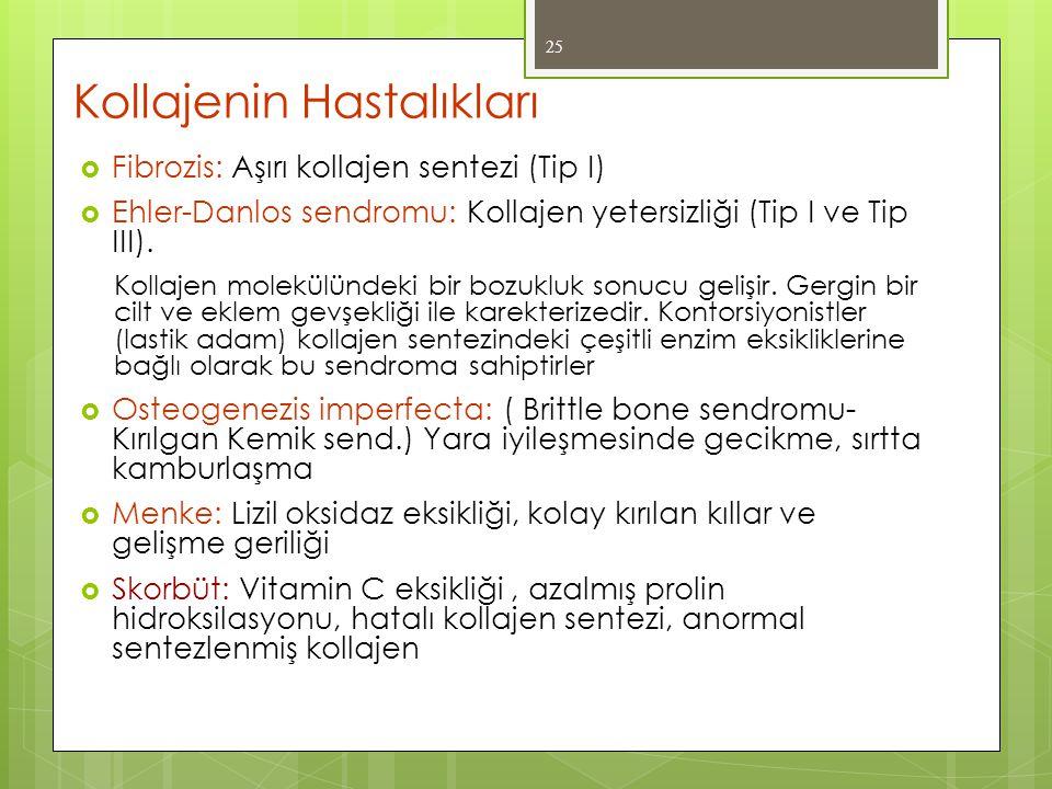 Kollajenin Hastalıkları  Fibrozis: Aşırı kollajen sentezi (Tip I)  Ehler-Danlos sendromu: Kollajen yetersizliği (Tip I ve Tip III). Kollajen molekül