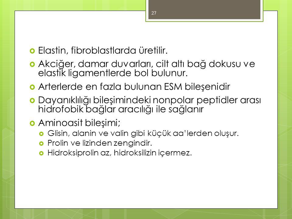  Elastin, fibroblastlarda üretilir.  Akciğer, damar duvarları, cilt altı bağ dokusu ve elastik ligamentlerde bol bulunur.  Arterlerde en fazla bulu