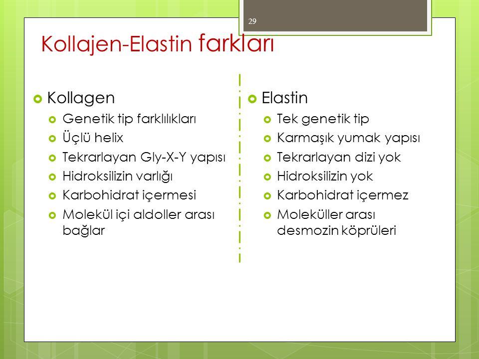 Kollajen-Elastin farkları 29  Kollagen  Genetik tip farklılıkları  Üçlü helix  Tekrarlayan Gly-X-Y yapısı  Hidroksilizin varlığı  Karbohidrat iç