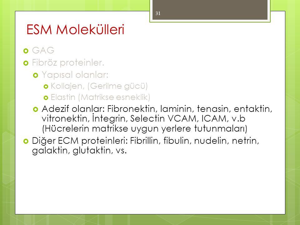  GAG  Fibröz proteinler.  Yapısal olanlar:  Kollajen, (Gerilme gücü)  Elastin (Matrikse esneklik)  Adezif olanlar: Fibronektin, laminin, tenasin
