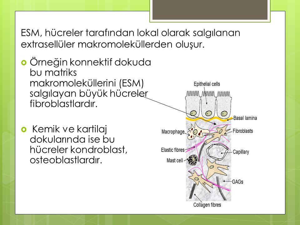 ESM, hücreler tarafından lokal olarak salgılanan extrasellüler makromoleküllerden oluşur.  Örneğin konnektif dokuda bu matriks makromoleküllerini (ES