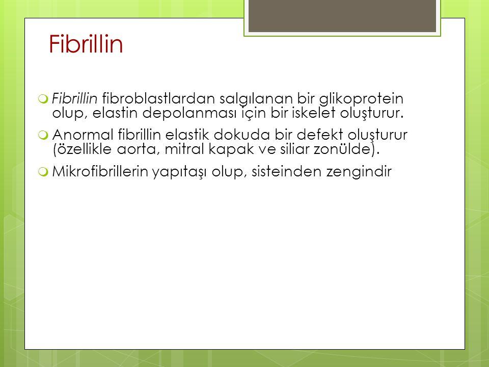 Fibrillin  Fibrillin fibroblastlardan salgılanan bir glikoprotein olup, elastin depolanması için bir iskelet oluşturur.  Anormal fibrillin elastik d