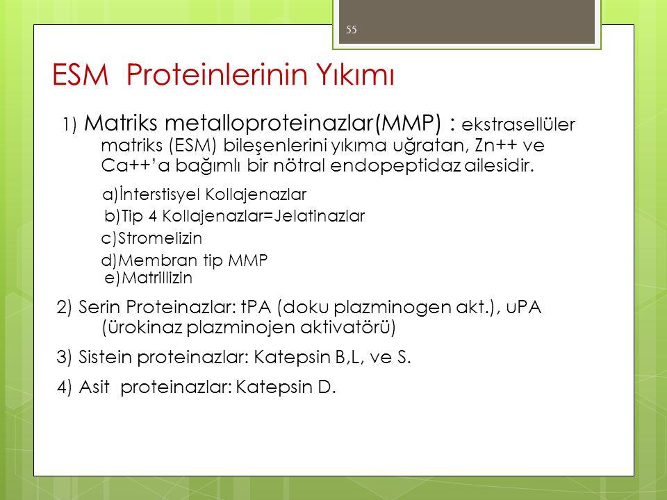 1) Matriks metalloproteinazlar(MMP) : ekstrasellüler matriks (ESM) bileşenlerini yıkıma uğratan, Zn++ ve Ca++'a bağımlı bir nötral endopeptidaz ailesi