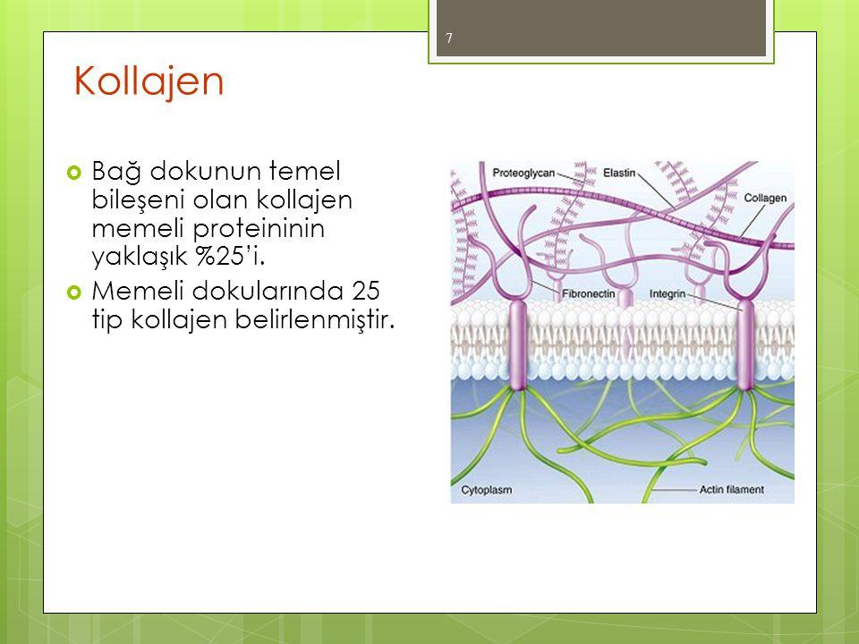 Kollajen  Bağ dokunun temel bileşeni olan kollajen memeli proteininin yaklaşık %25'i.  Memeli dokularında 25 tip kollajen belirlenmiştir. 7