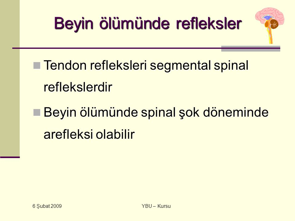 6 Şubat 2009 YBU – Kursu Beyin ölümünde refleksler Tendon refleksleri segmental spinal reflekslerdir Tendon refleksleri segmental spinal reflekslerdir