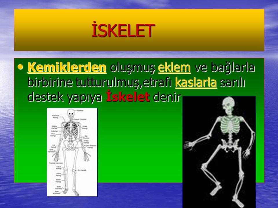İSKELET İSKELET Kemiklerden oluşmuş eklem ve bağlarla birbirine tutturulmuş,etrafı kaslarla sarılı destek yapıya İskelet denir Kemiklerden oluşmuş ekl