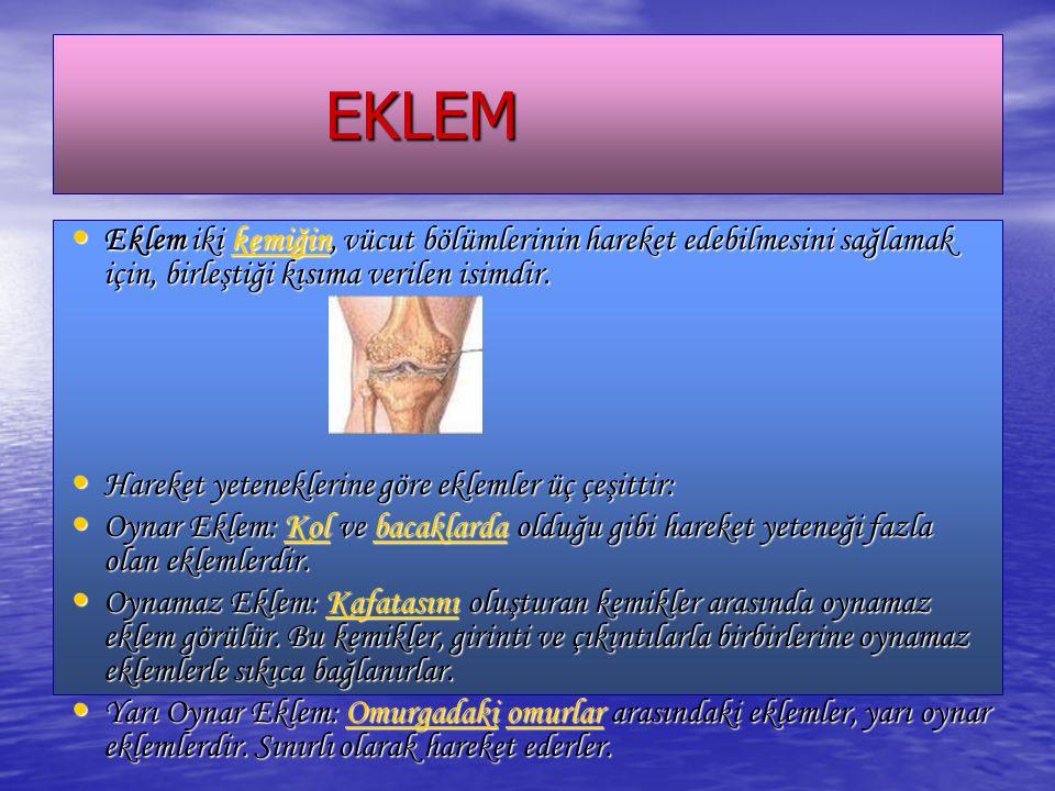 EKLEM EKLEM Eklem iki kemiğin, vücut bölümlerinin hareket edebilmesini sağlamak için, birleştiği kısıma verilen isimdir. Eklem iki kemiğin, vücut bölü
