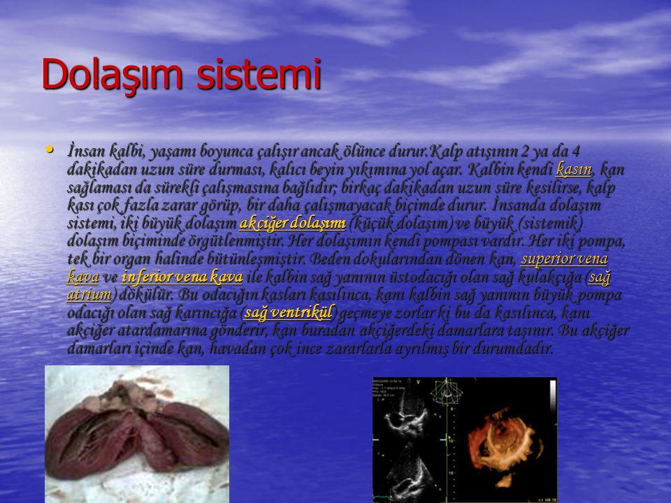 Dolaşım sistemi İnsan kalbi, yaşamı boyunca çalışır ancak ölünce durur.Kalp atışının 2 ya da 4 dakikadan uzun süre durması, kalıcı beyin yıkımına yol