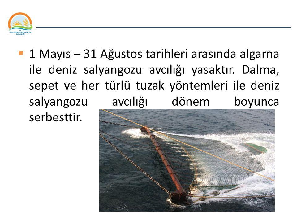 Balıkçılık ve Su Ürünleri Genel Müdürlüğü  1 Mayıs – 31 Ağustos tarihleri arasında algarna ile deniz salyangozu avcılığı yasaktır. Dalma, sepet ve he