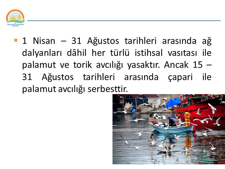 Balıkçılık ve Su Ürünleri Genel Müdürlüğü  1 Nisan – 31 Ağustos tarihleri arasında ağ dalyanları dâhil her türlü istihsal vasıtası ile palamut ve tor