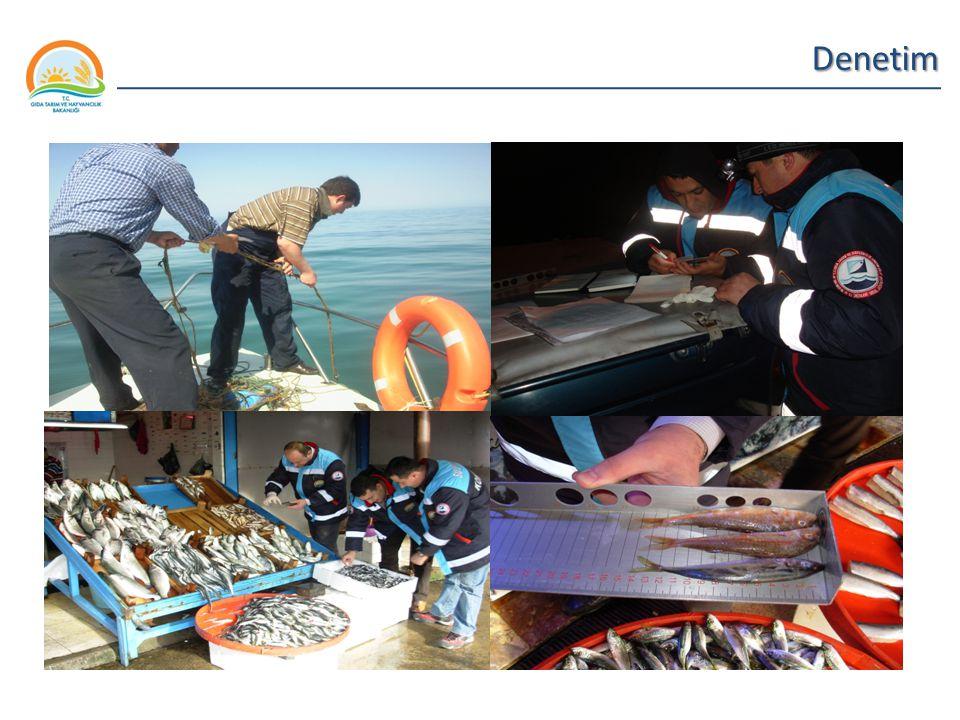 Balıkçılık ve Su Ürünleri Genel Müdürlüğü Denetim 3