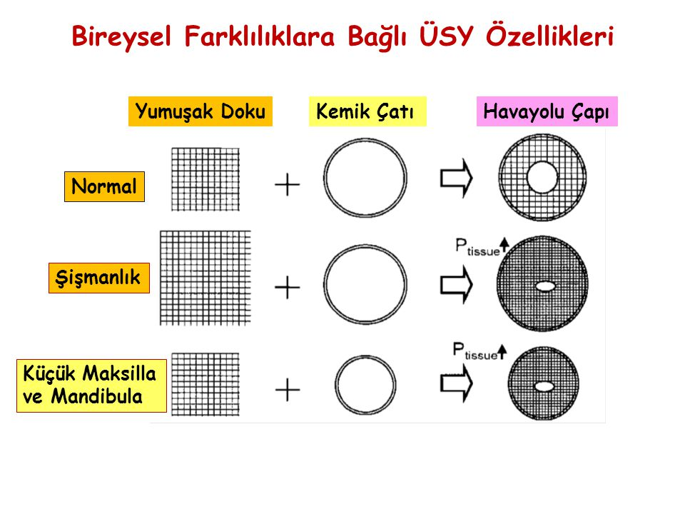 Normal Şişmanlık Küçük Maksilla ve Mandibula Yumuşak DokuKemik ÇatıHavayolu Çapı Bireysel Farklılıklara Bağlı ÜSY Özellikleri