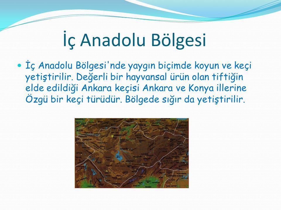 İç Anadolu Bölgesi İç Anadolu Bölgesi'nde yaygın biçimde koyun ve keçi yetiştirilir. Değerli bir hayvansal ürün olan tiftiğin elde edildiği Ankara keç