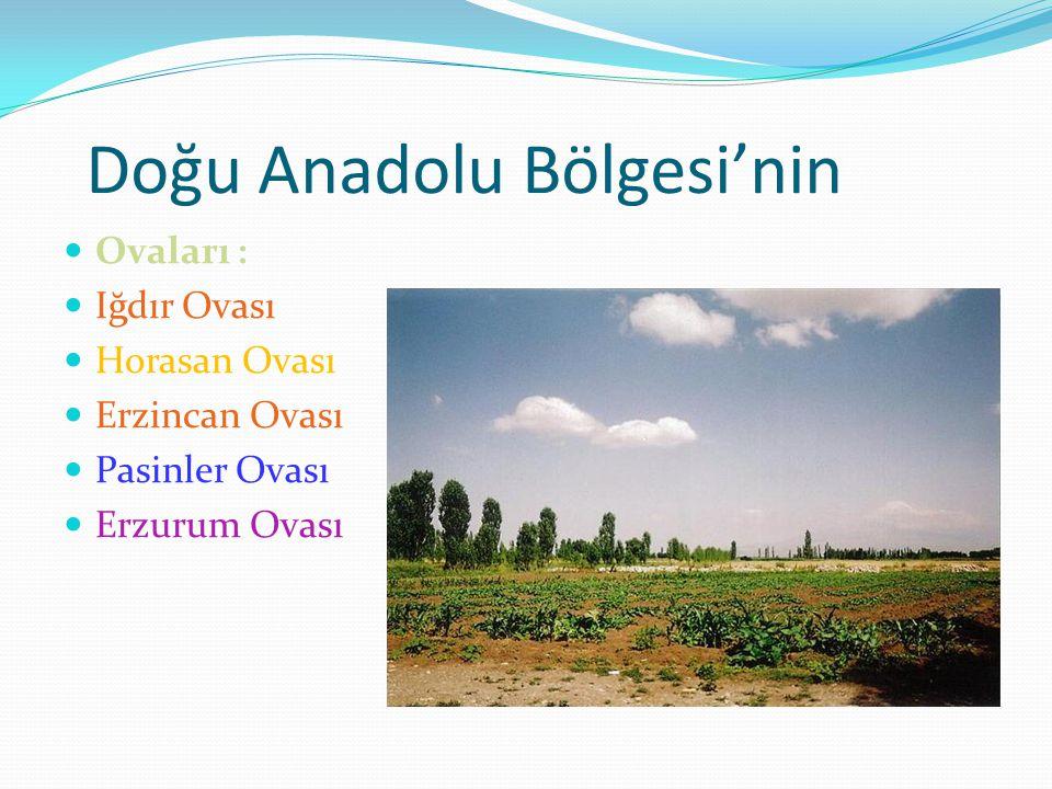 Doğu Anadolu Bölgesi'nin Ovaları : Iğdır Ovası Horasan Ovası Erzincan Ovası Pasinler Ovası Erzurum Ovası