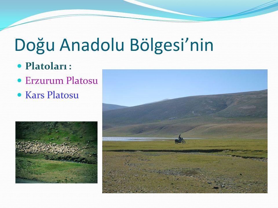 Doğu Anadolu Bölgesi'nin Platoları : Erzurum Platosu Kars Platosu