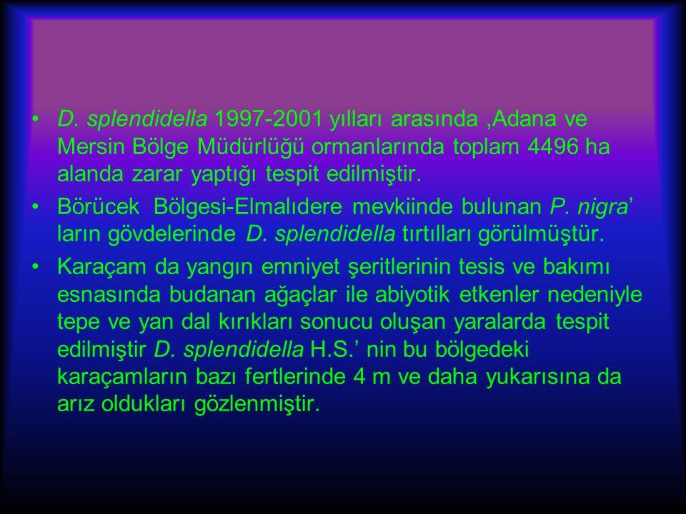 D. splendidella 1997-2001 yılları arasında,Adana ve Mersin Bölge Müdürlüğü ormanlarında toplam 4496 ha alanda zarar yaptığı tespit edilmiştir. Börücek