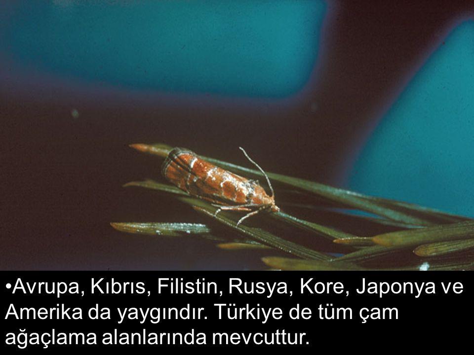 Avrupa, Kıbrıs, Filistin, Rusya, Kore, Japonya ve Amerika da yaygındır. Türkiye de tüm çam ağaçlama alanlarında mevcuttur.