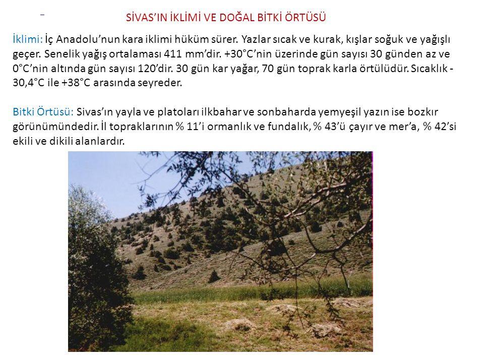 Türkiye genelinde okuma yazma bilmeyenlerin oranı % 7,7 iken, Sivas il genelinde % 9,8'tir.