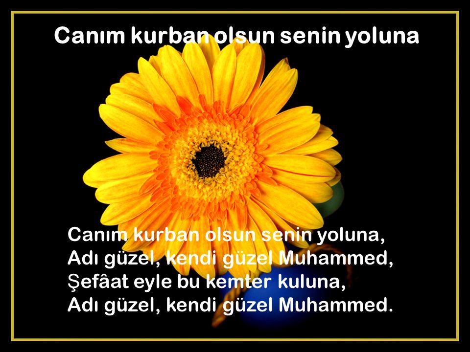 Canım kurban olsun senin yoluna Canım kurban olsun senin yoluna, Adı güzel, kendi güzel Muhammed, Ş efâat eyle bu kemter kuluna, Adı güzel, kendi güze
