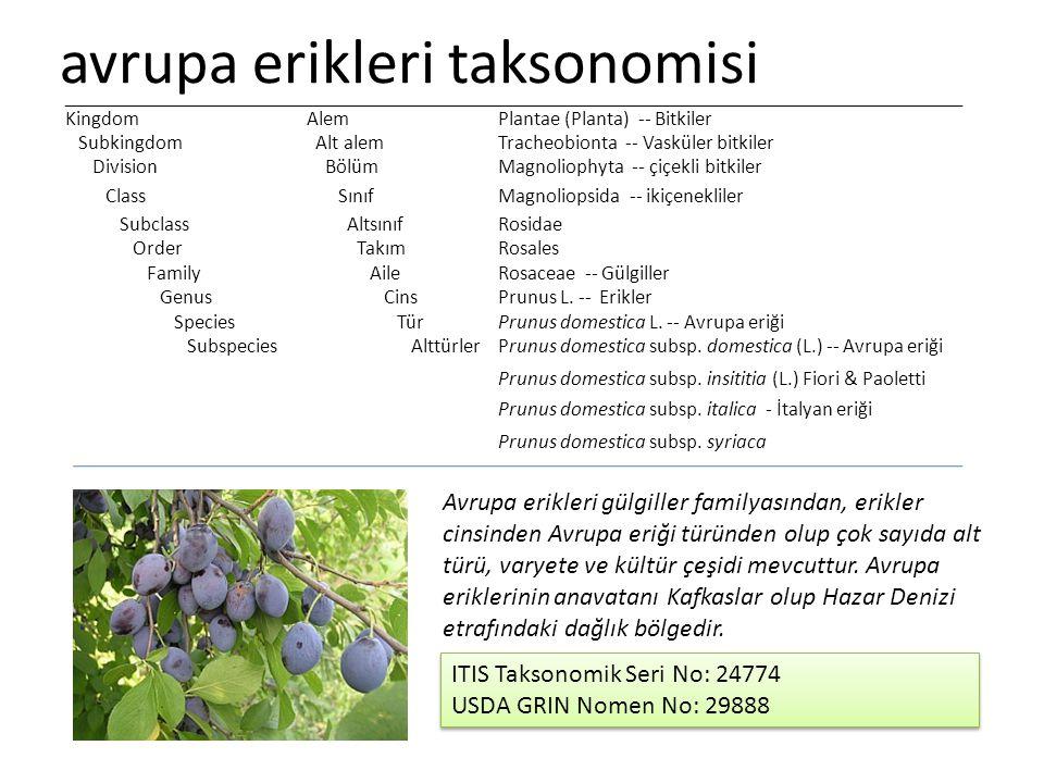 avrupa erikleri taksonomisi Prunus domestica subsp.