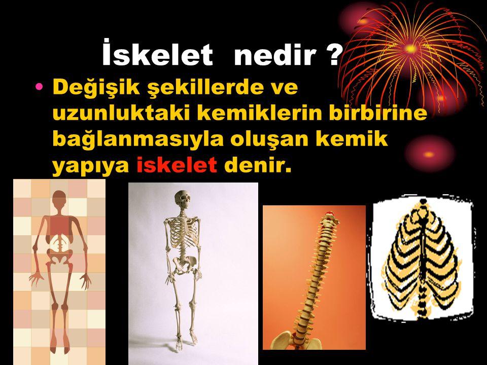 Kemik nedir? Hareket etmemizi sağlayan ve hareket etmemize yardımcı olan sert yapıya kemik denir.