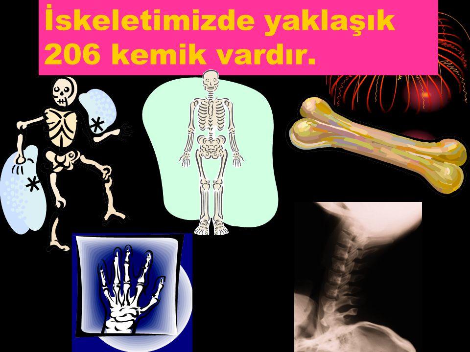 Eklem nedir? Kemikleri birbirine bağlayan yapıya eklem denir.