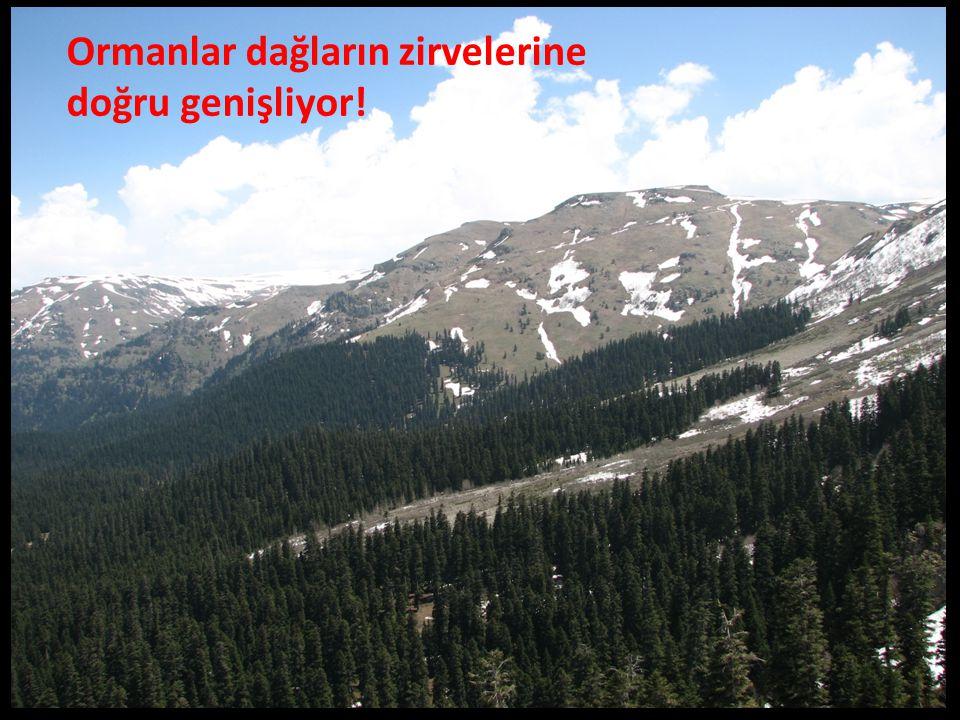 Ormanlar dağların zirvelerine doğru genişliyor!
