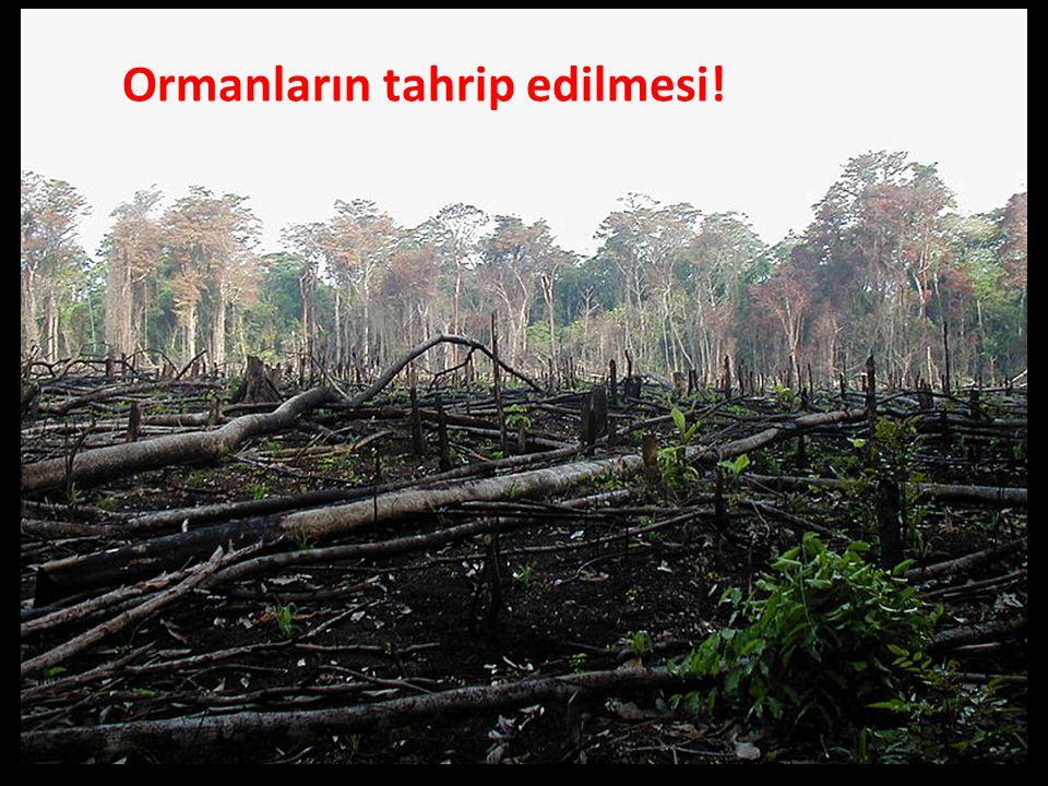 Ormanların tahrip edilmesi!