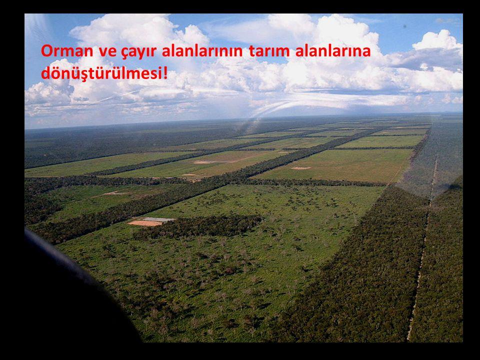 Orman ve çayır alanlarının tarım alanlarına dönüştürülmesi!