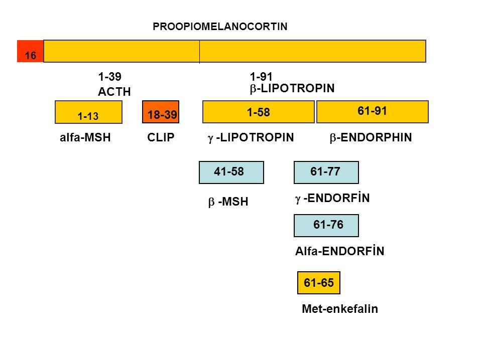 PROOPIOMELANOCORTIN 1616 1-13 61-65 1-58 1-391-91 ACTH  -LIPOTROPIN alfa-MSH 18-39  -LIPOTROPIN  -ENDORPHIN 61-91 CLIP 61-77 41-58  -MSH  -ENDORF