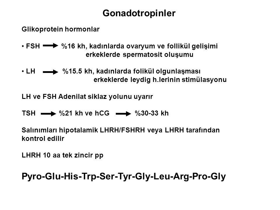 Gonadotropinler Glikoprotein hormonlar FSH %16 kh, kadınlarda ovaryum ve follikül gelişimi erkeklerde spermatosit oluşumu LH %15.5 kh, kadınlarda foli