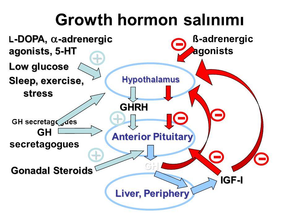 Growth hormon salınımı Hypothalamus Liver, Periphery IGF-I Anterior Pituitary GH L -DOPA,  -adrenergic agonists, 5-HT Low glucose Sleep, exercise, st