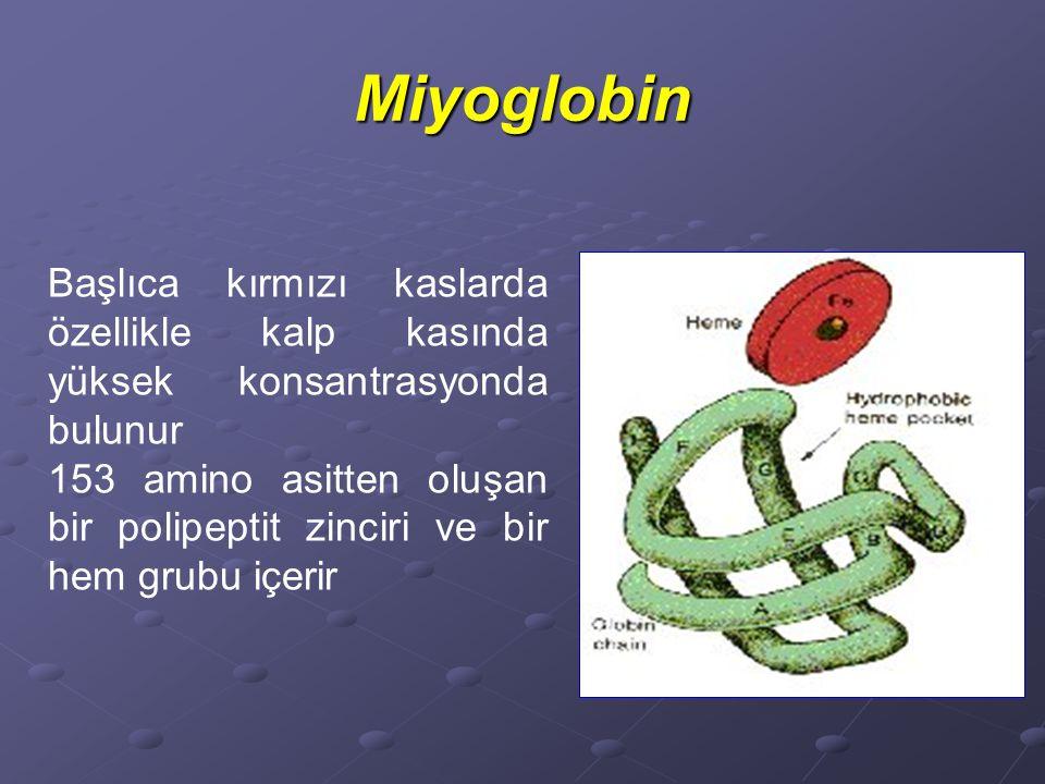 Miyoglobin Başlıca kırmızı kaslarda özellikle kalp kasında yüksek konsantrasyonda bulunur 153 amino asitten oluşan bir polipeptit zinciri ve bir hem grubu içerir