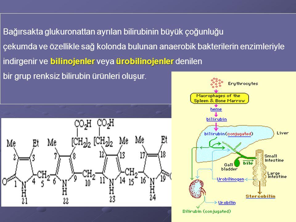 Bağırsakta glukuronattan ayrılan bilirubinin büyük çoğunluğu çekumda ve özellikle sağ kolonda bulunan anaerobik bakterilerin enzimleriyle bilinojenlerürobilinojenler indirgenir ve bilinojenler veya ürobilinojenler denilen bir grup renksiz bilirubin ürünleri oluşur.