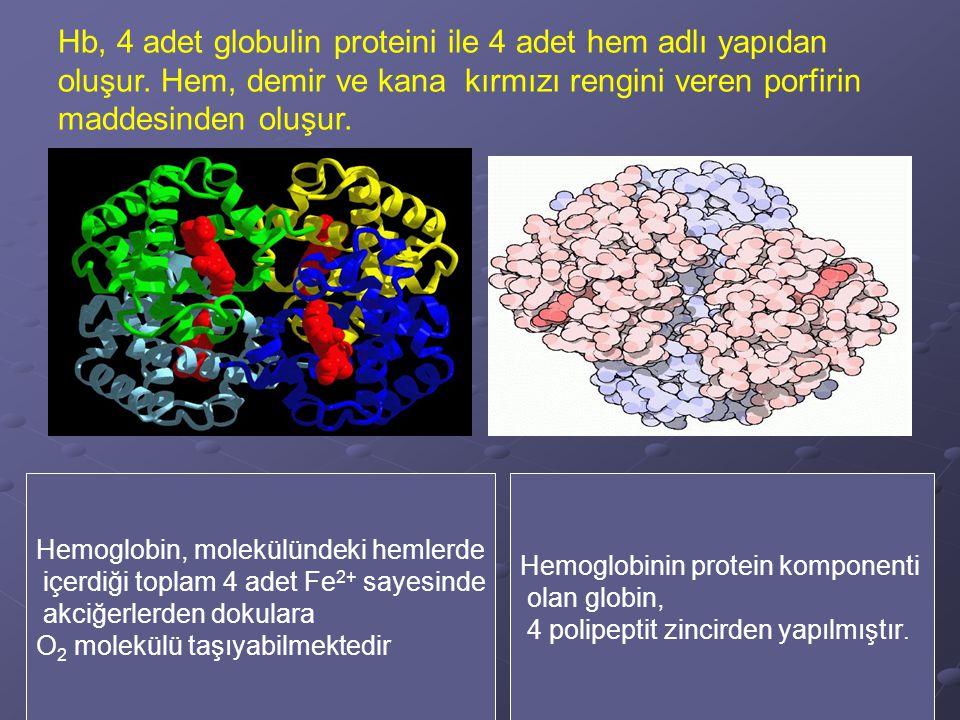 Oksihemoglobin (HbO 2 ) Karbaminohemoglobin Karboksihemoglobin (Hb  CO) MethemoglobinSulfhemoglobin Azotmonoksit hemoglobin Siyanhemoglobin Hemoglobin bileşikleri