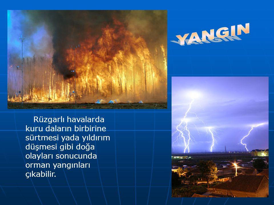 Rüzgarlı havalarda kuru daların birbirine sürtmesi yada yıldırım düşmesi gibi doğa olayları sonucunda orman yangınları çıkabilir.