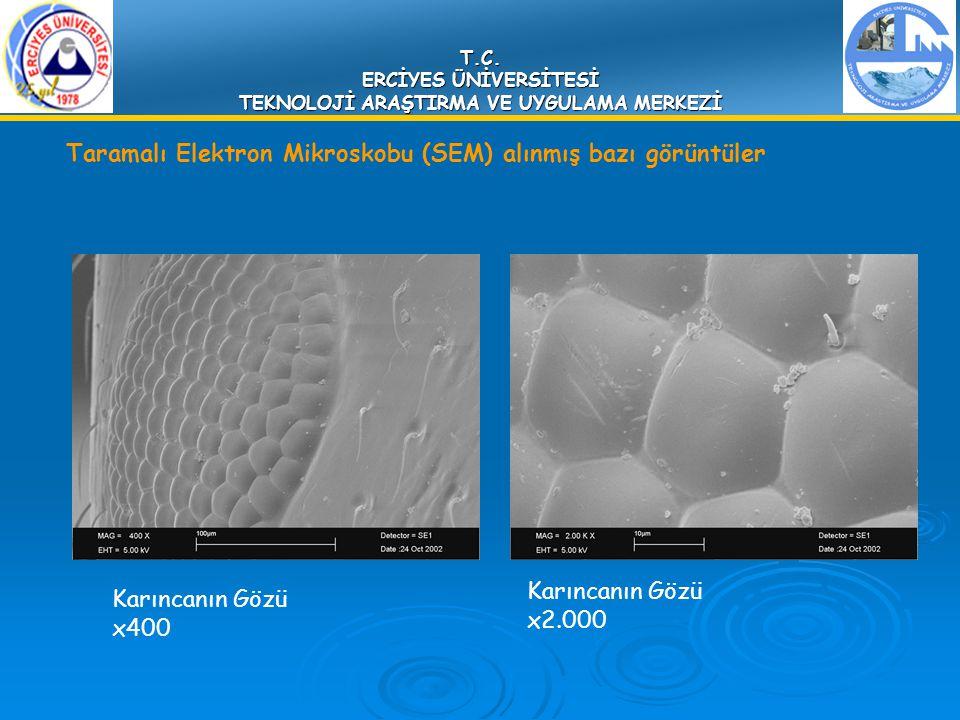 T.C. ERCİYES ÜNİVERSİTESİ TEKNOLOJİ ARAŞTIRMA VE UYGULAMA MERKEZİ Taramalı Elektron Mikroskobu (SEM) alınmış bazı görüntüler Karıncanın Gözü x2.000 Ka