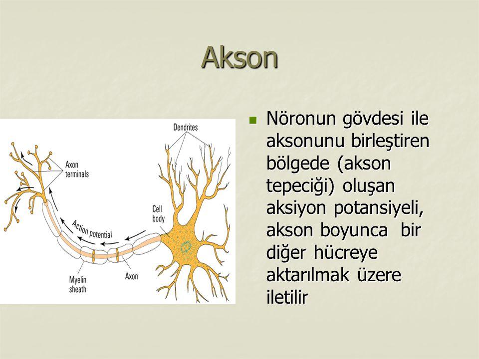 Akson Nöronun gövdesi ile aksonunu birleştiren bölgede (akson tepeciği) oluşan aksiyon potansiyeli, akson boyunca bir diğer hücreye aktarılmak üzere iletilir Nöronun gövdesi ile aksonunu birleştiren bölgede (akson tepeciği) oluşan aksiyon potansiyeli, akson boyunca bir diğer hücreye aktarılmak üzere iletilir
