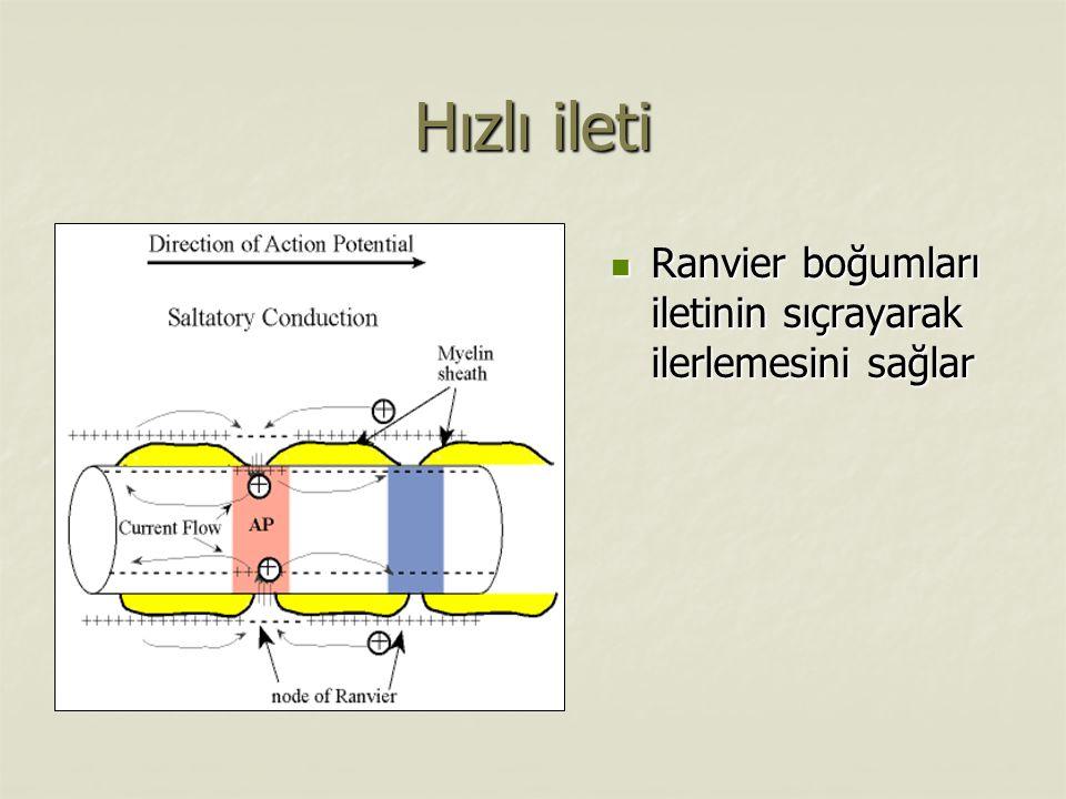 Hızlı ileti Ranvier boğumları iletinin sıçrayarak ilerlemesini sağlar Ranvier boğumları iletinin sıçrayarak ilerlemesini sağlar