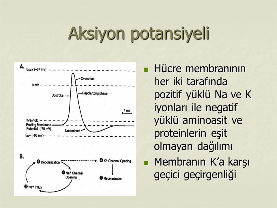 Aksiyon potansiyeli Hücre membranının her iki tarafında pozitif yüklü Na ve K iyonları ile negatif yüklü aminoasit ve proteinlerin eşit olmayan dağılımı Hücre membranının her iki tarafında pozitif yüklü Na ve K iyonları ile negatif yüklü aminoasit ve proteinlerin eşit olmayan dağılımı Membranın K'a karşı geçici geçirgenliği Membranın K'a karşı geçici geçirgenliği