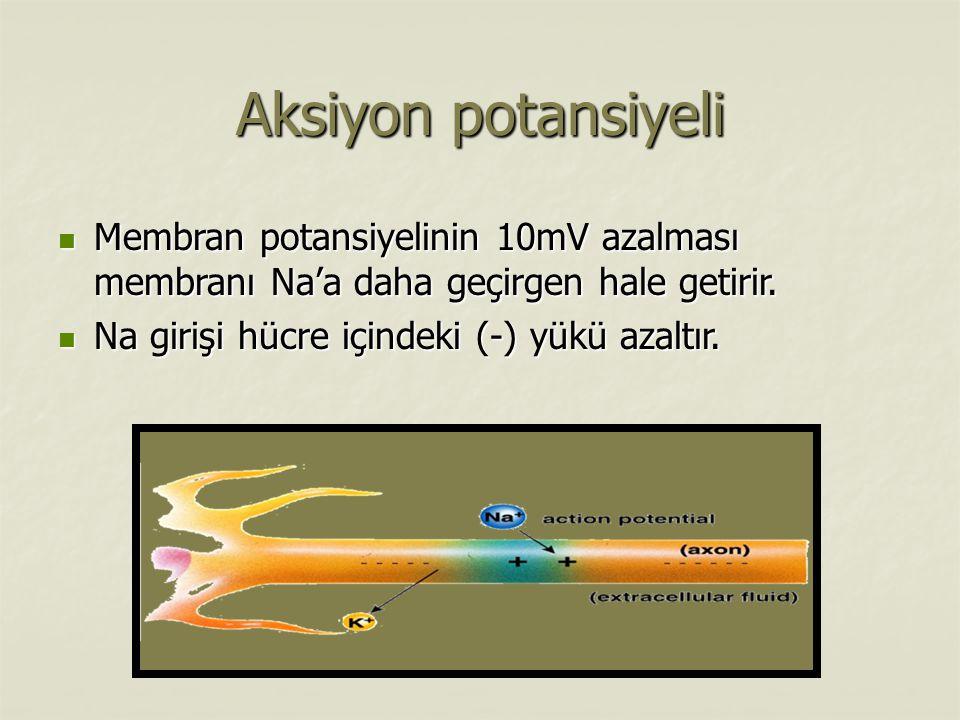 Aksiyon potansiyeli Membran potansiyelinin 10mV azalması membranı Na'a daha geçirgen hale getirir.