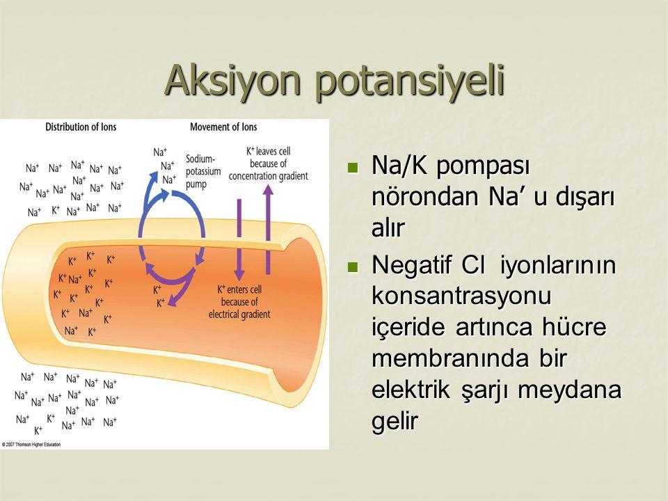 Aksiyon potansiyeli Na/K pompası nörondan Na' u dışarı alır Na/K pompası nörondan Na' u dışarı alır Negatif Cl iyonlarının konsantrasyonu içeride artınca hücre membranında bir elektrik şarjı meydana gelir Negatif Cl iyonlarının konsantrasyonu içeride artınca hücre membranında bir elektrik şarjı meydana gelir