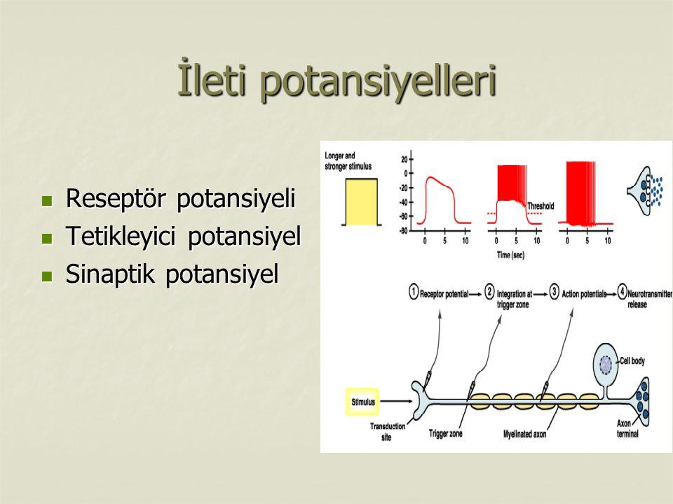 İleti potansiyelleri Reseptör potansiyeli Reseptör potansiyeli Tetikleyici potansiyel Tetikleyici potansiyel Sinaptik potansiyel Sinaptik potansiyel